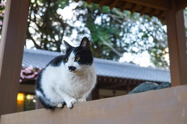 江島神社の猫