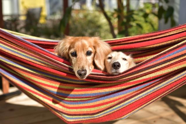 ハンモックと犬